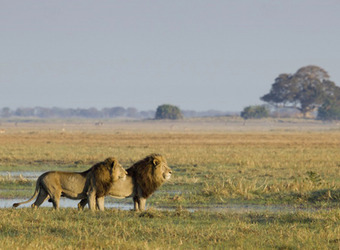 Photo: Kafue Nat'l Park