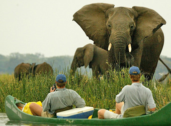 Elephant with baby elephant gazes at safari guests in a grooved canoe mere feet away in the Zambezi River in Mana Pools National Park, Zimbabwe