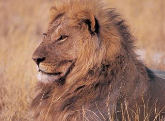 Photo: Madikwe Game Reserve
