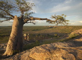 A couple of safari guests look out over the plains from beneath an expansive, sheltering Boabab tree in Mashatu Game Reserve, South Africa