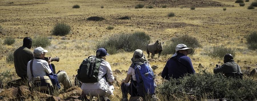 Huge_desert_rhino_camp_dana_allen