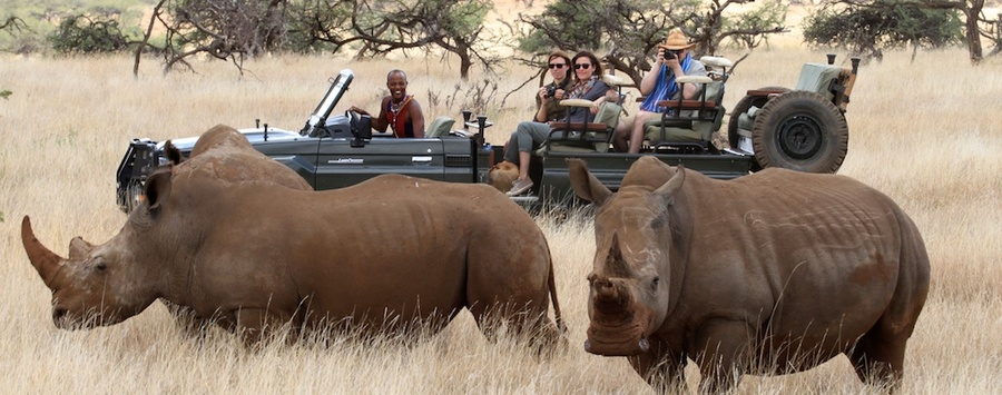 Huge_game_drive_with_rhino