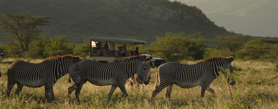 Huge_saruni_samburu_zebra