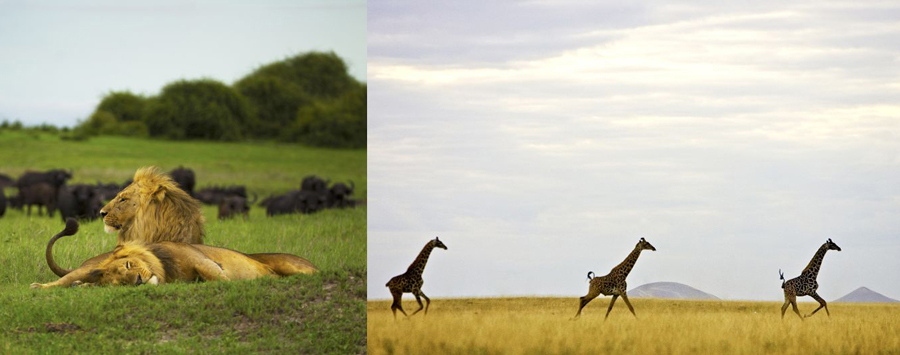 Huge_duba_and_ol_donyo__c__beverly_joubert