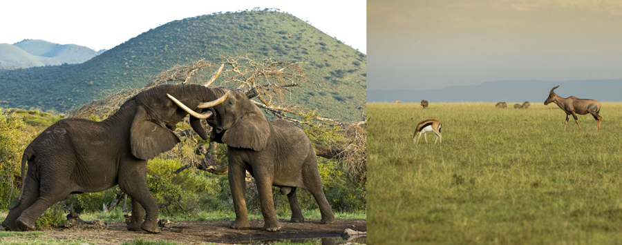 Huge_ol_donyo_and_mara_plains__c__great_plains_conservation