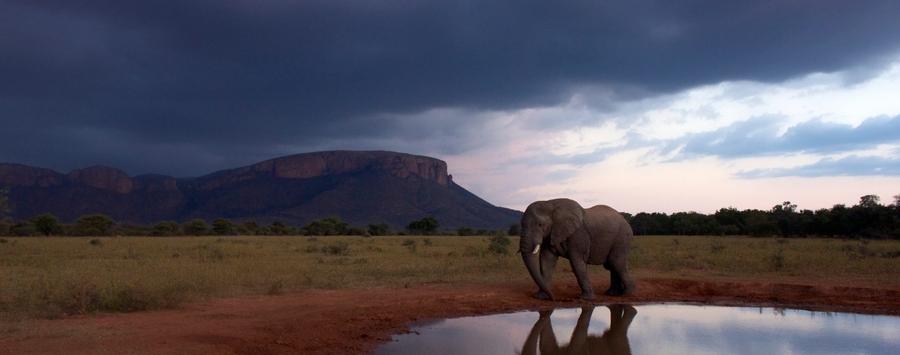 Huge_elephant_scene__1280x853_