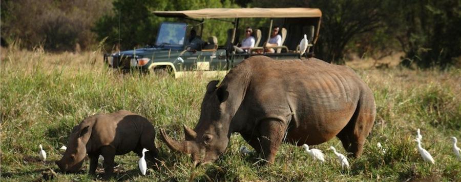 Huge_elsa_s_kopjes-wildlife